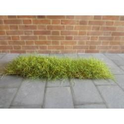 Buisson plaque herbe