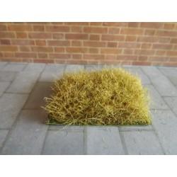 Petit carré d'herbe sèche