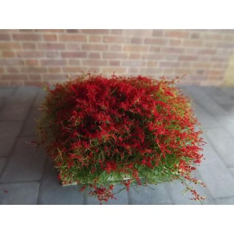 Buion fleuri rouge