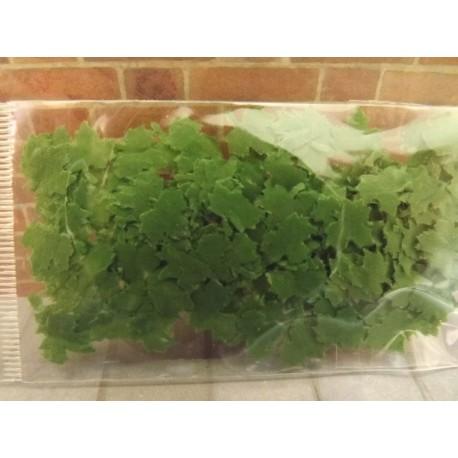 Sachet de fausses feuilles de 1cm, modèle 1