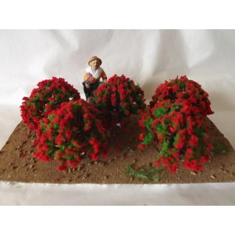 Décor champs de rosiers rouges