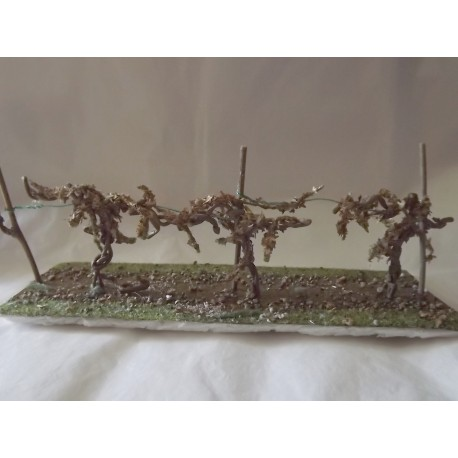 Décor de vignes en hiver