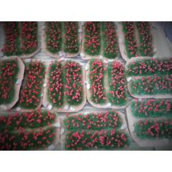 """Petit champ d'oeillets rouges sur """"terre"""" 10cm de long"""