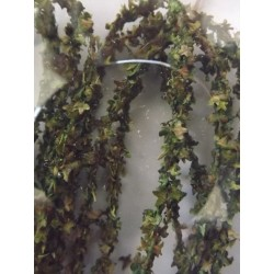 Liane de feuilles vert printemps, 2m de long