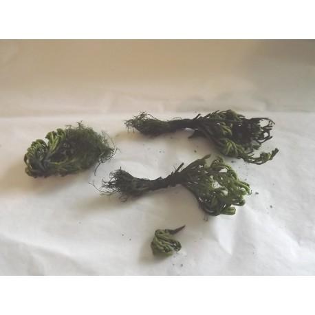 Plante naturelle stabilée pour décor végétation, N°2