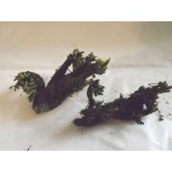 Plante naturelle stabilisée pour décor végétation, N°3