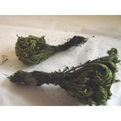 Plante naturelle stabilisée pour décor végétation, N°4